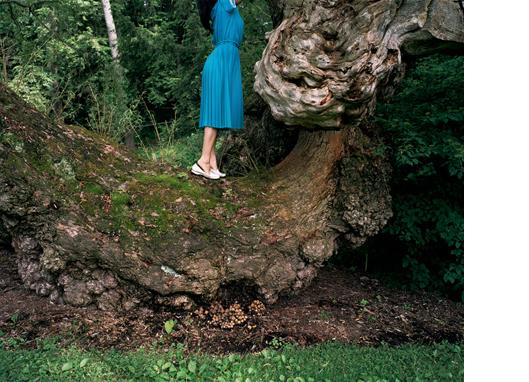 Mushroom Cut  30 x 40 inches