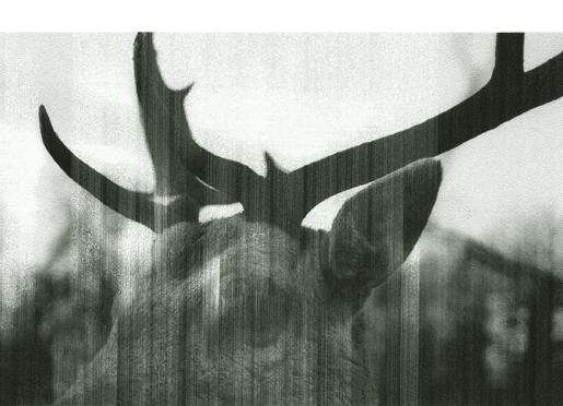 Deer  Under My Skin series C-Print