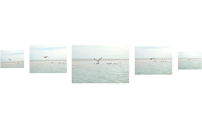 Untitled (birds)   2010-11  various diminsions  Archival pigment print