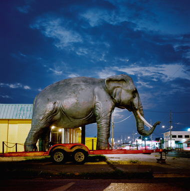 Nungesser Elephant, 2010  36 x 36 inches Archival pigment print