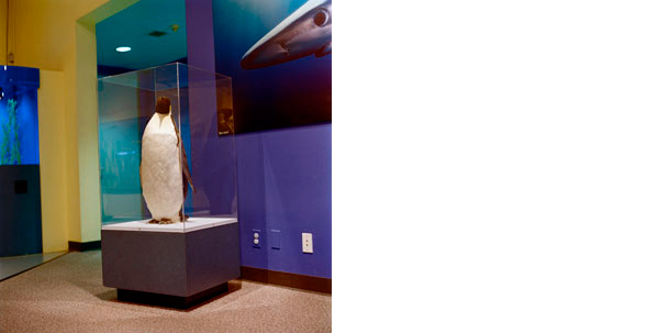 COLLEEN PLUMB  Penguin  19 x 19 inches Archival Pigment print