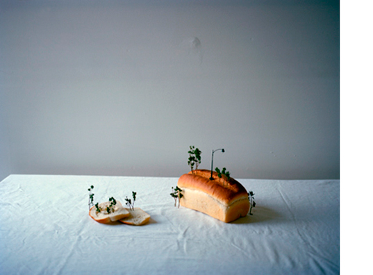 That Morning, 2012  30 x 38 inches Archival pigment print