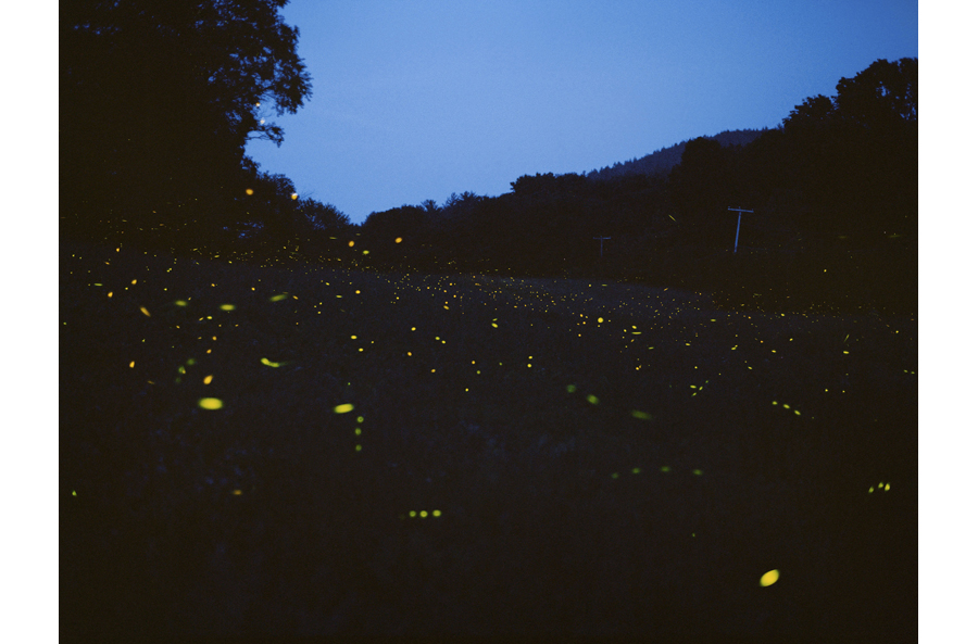 HLynton_fireflies.jpg