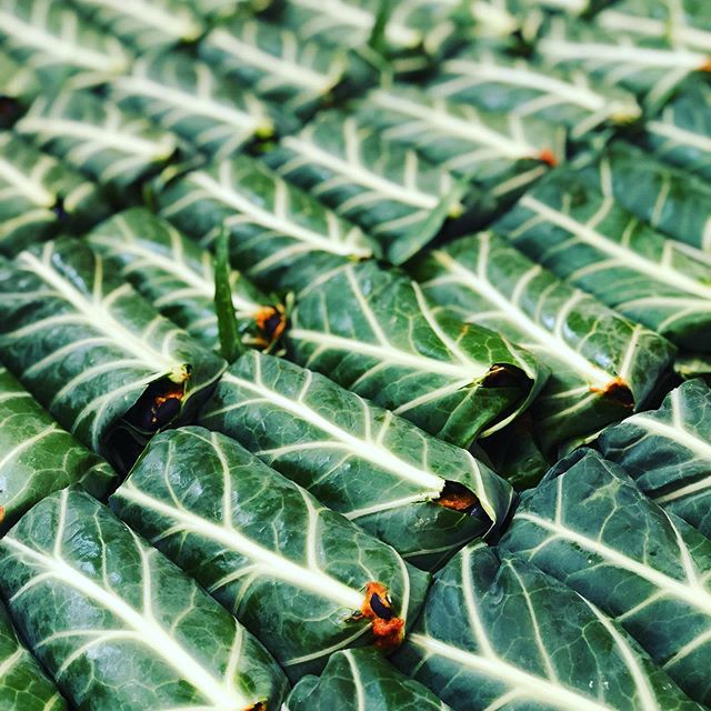 We are head over heals grateful for our local farmers.  Thank you for growing the best damn collard greens for our small biz.  Our wraps taste so much better because of you.