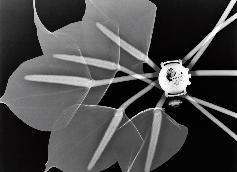 Montre Malte Chronographe — Vacheron Constantin  © Steve Miller Courtesy Editions Laumont