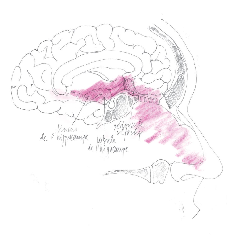 Illustration : Dr. Jean-Jacques Morel