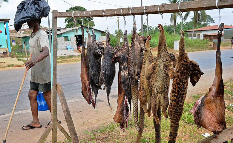 Serval, endangered pangolin, and other bushmeat is displayed for sale along a roadside outside Bata, Equatorial Guinea, in 2015. (Photo: Carl de Souza/AFP/Getty Images)