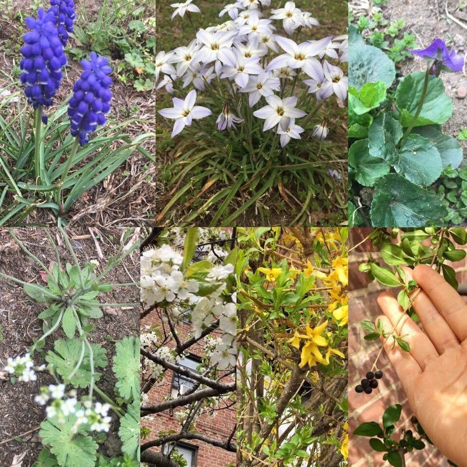 My field botany in Brooklyn, NY