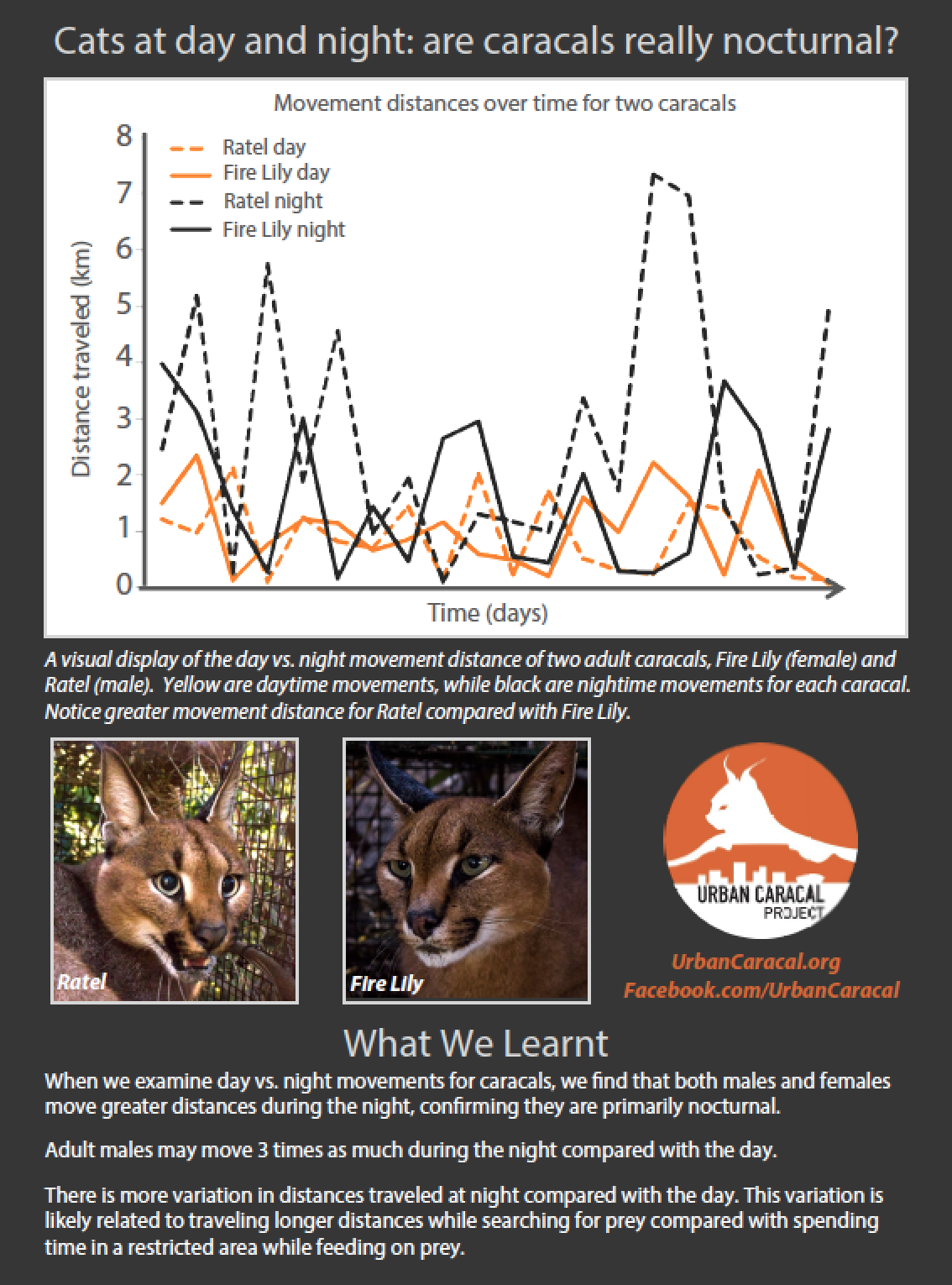 Cats at day and night: are caracals really nocturnal? - July 28, 2015