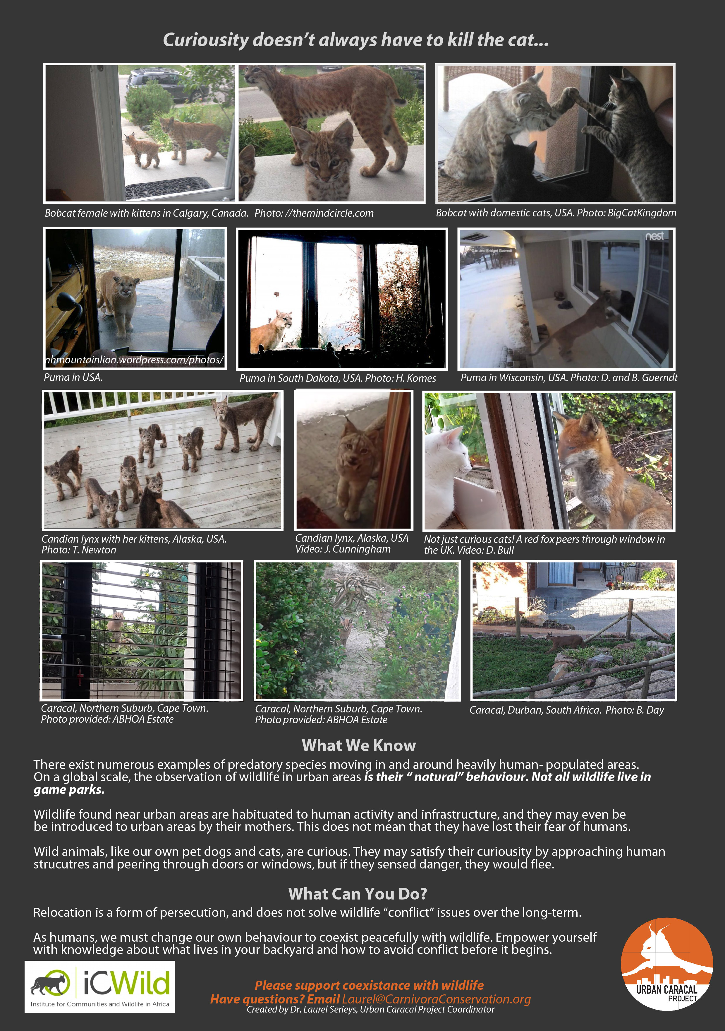 Curiousity doesn't always have to kill the cat.... - July 18, 2018