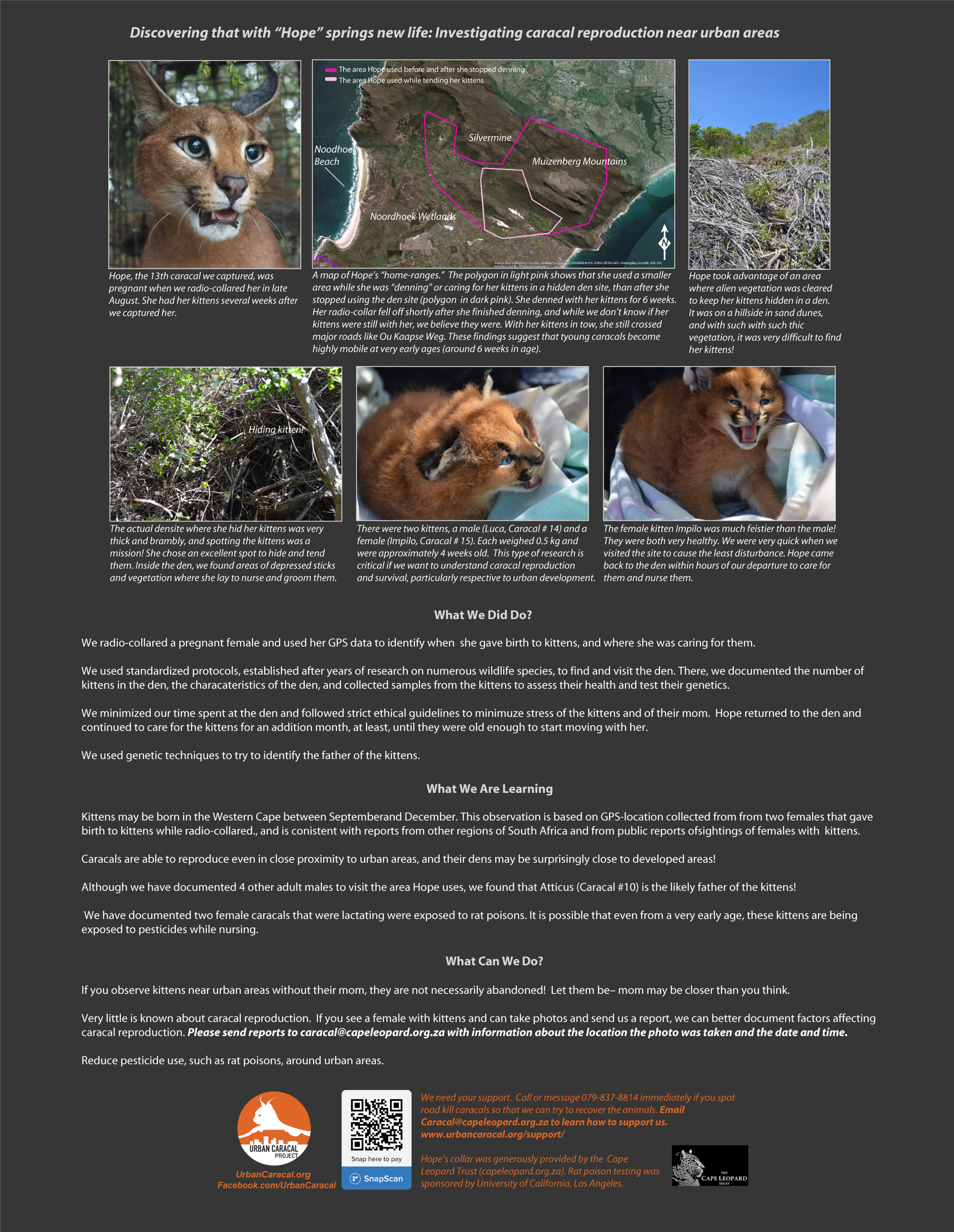 Infographics — Urban Caracal Project