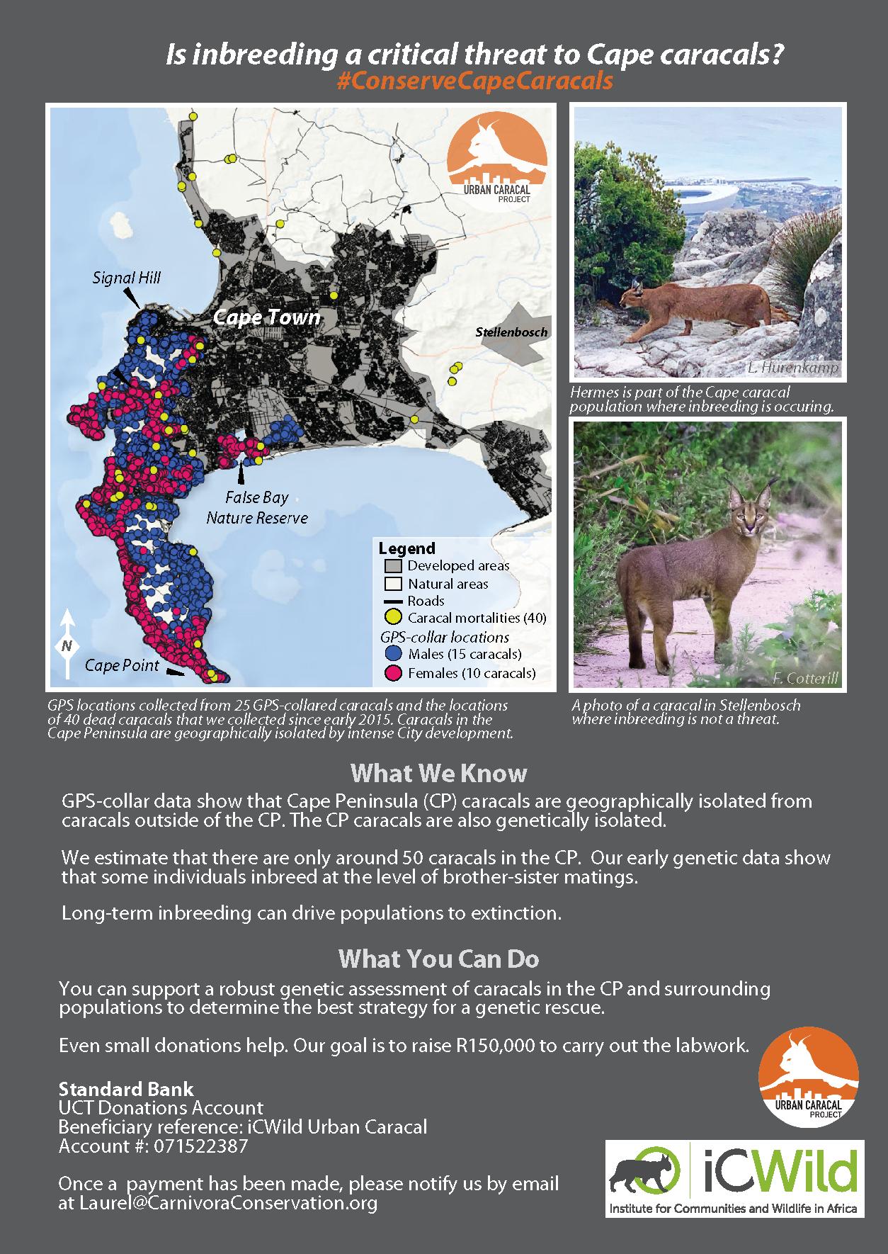 Is inbreeding a critical threat to Cape caracals? - April 19, 2019