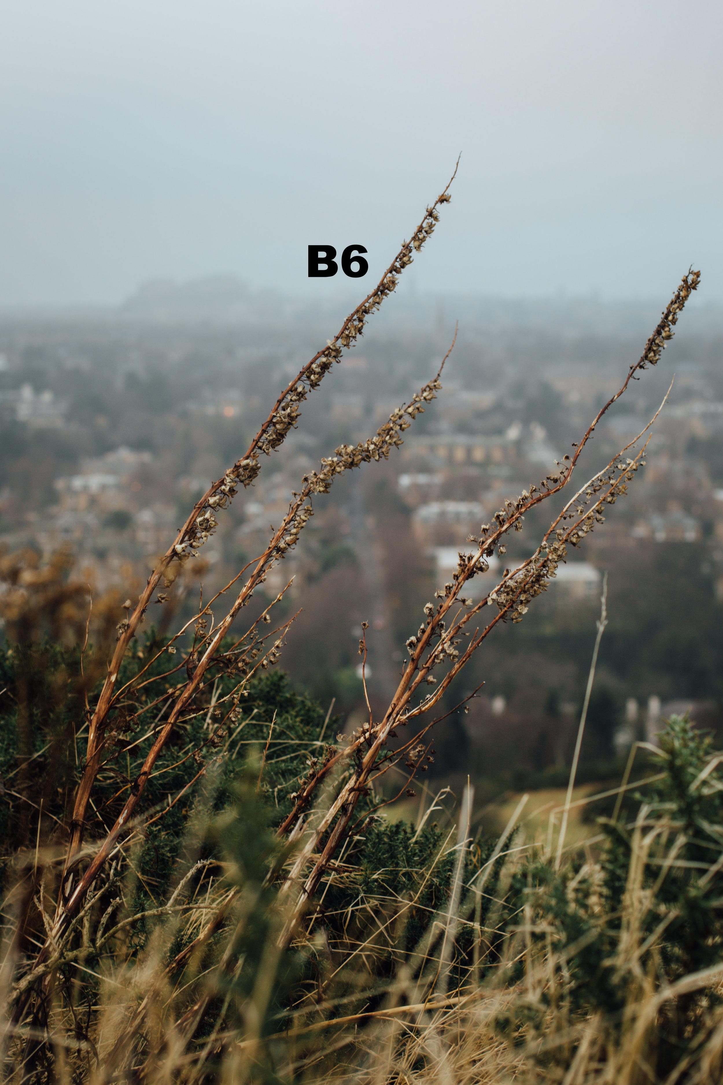 Blackford Hill 1 copy.jpg