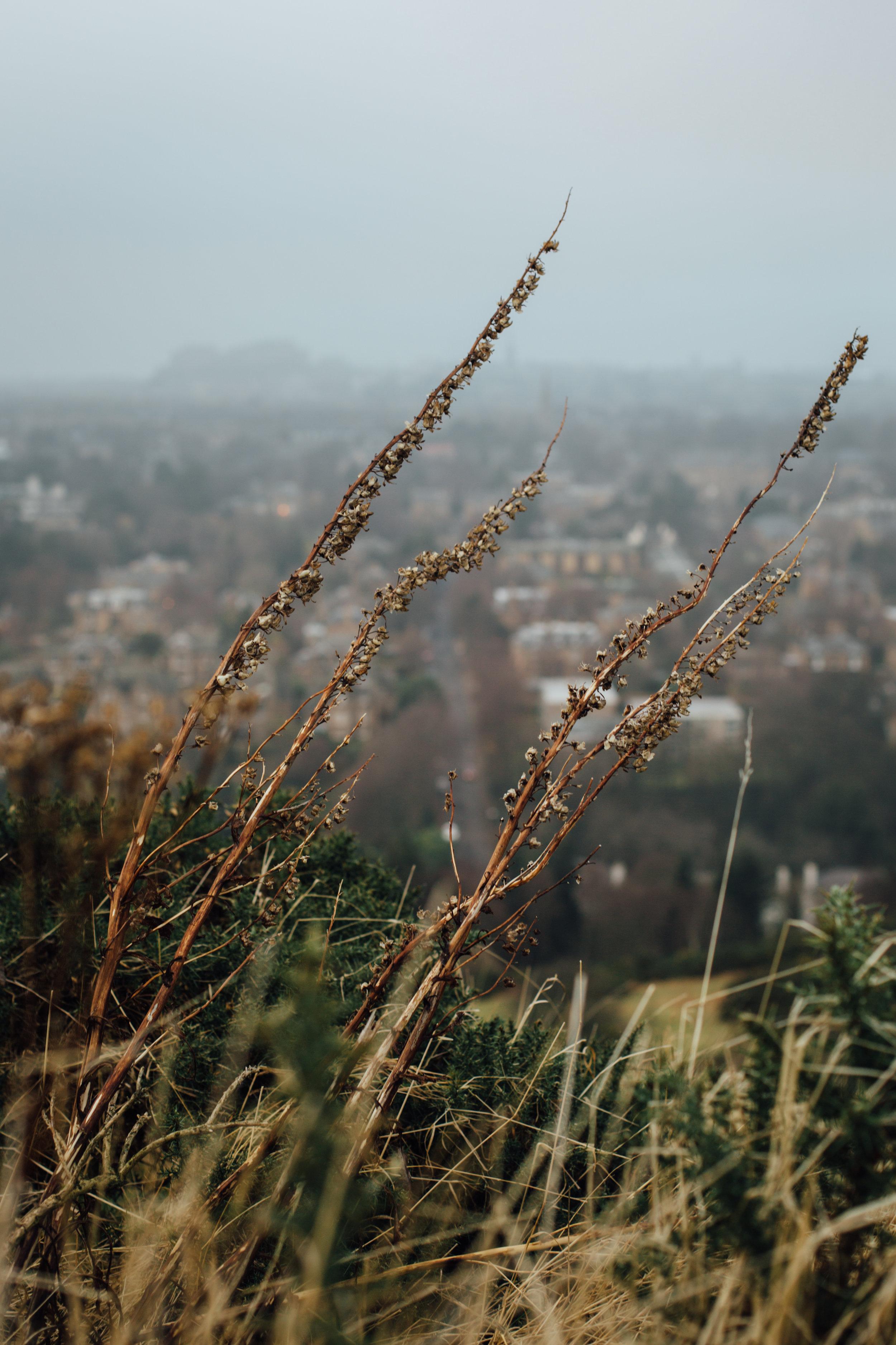 Blackford Hill 1.jpg