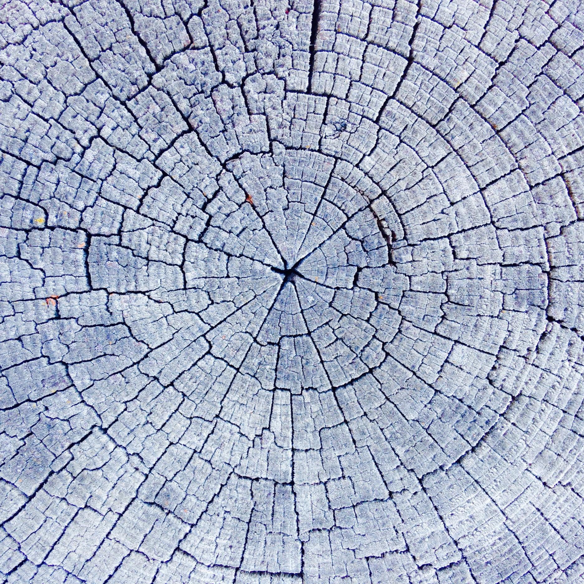 TreeSlice2.jpg