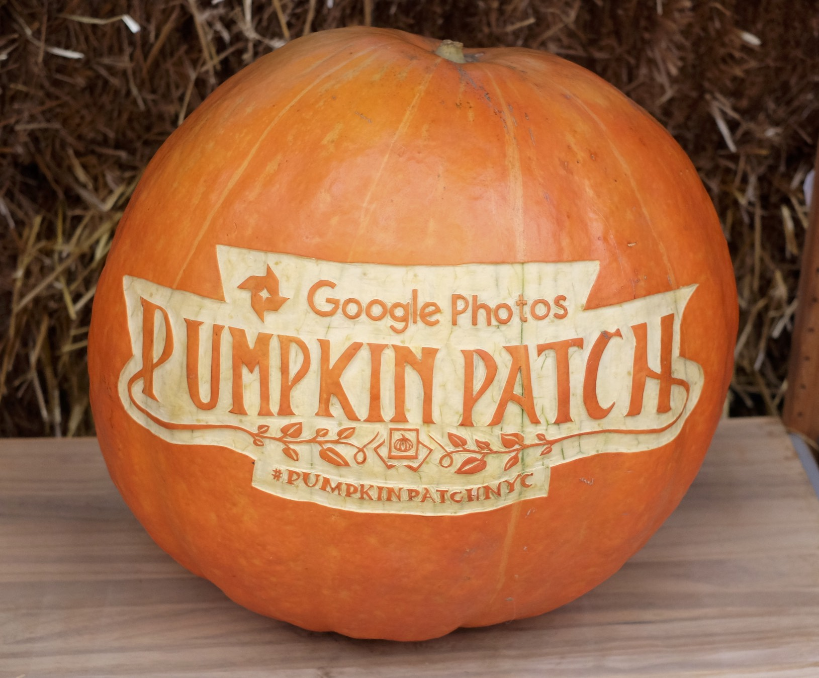 Google Photos event logo carved on 60 lb Atlantic Giant pumpkin.