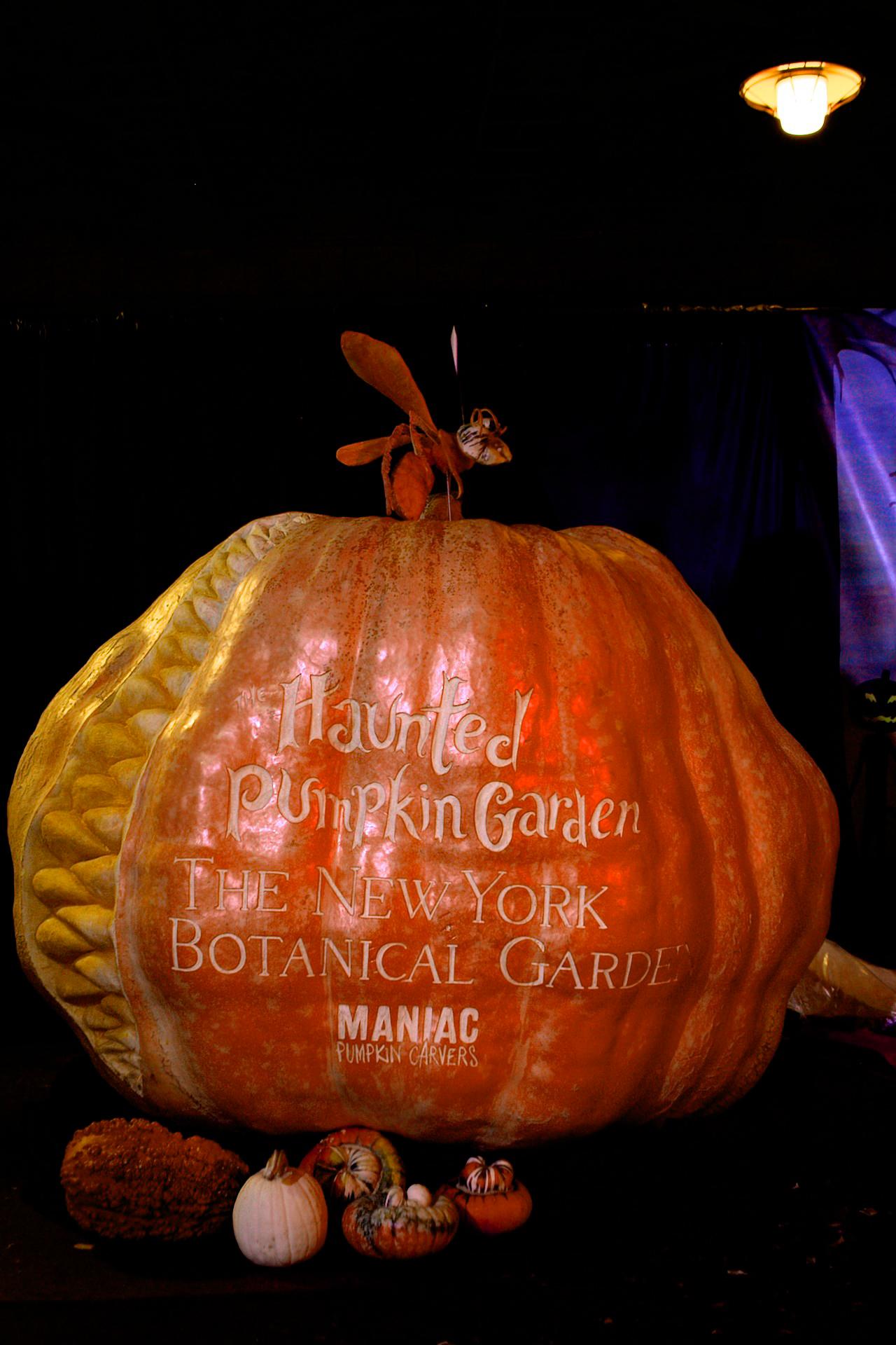 1800 pound pumpkin for New York Botanical Garden