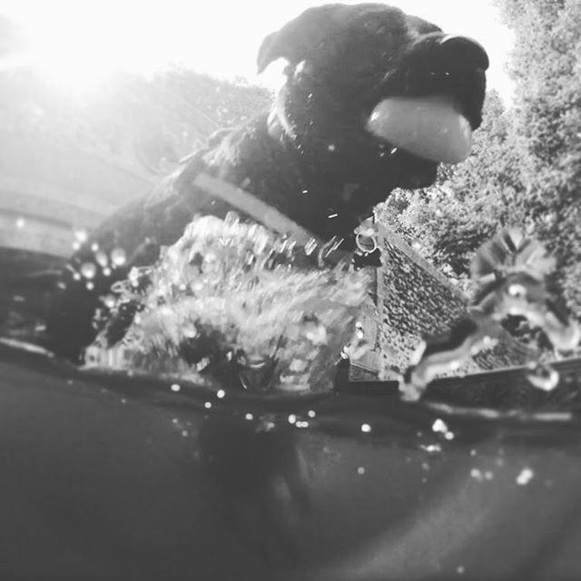 #dogwalk #dog #dogriver #river