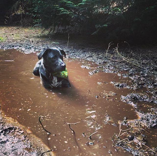 #dogwalk #mud #hippodog #newforest @matthewjefferson07