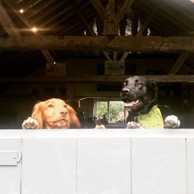 #dogsatwork #dogs
