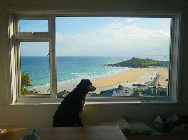 #stives #dog # beach #niceview