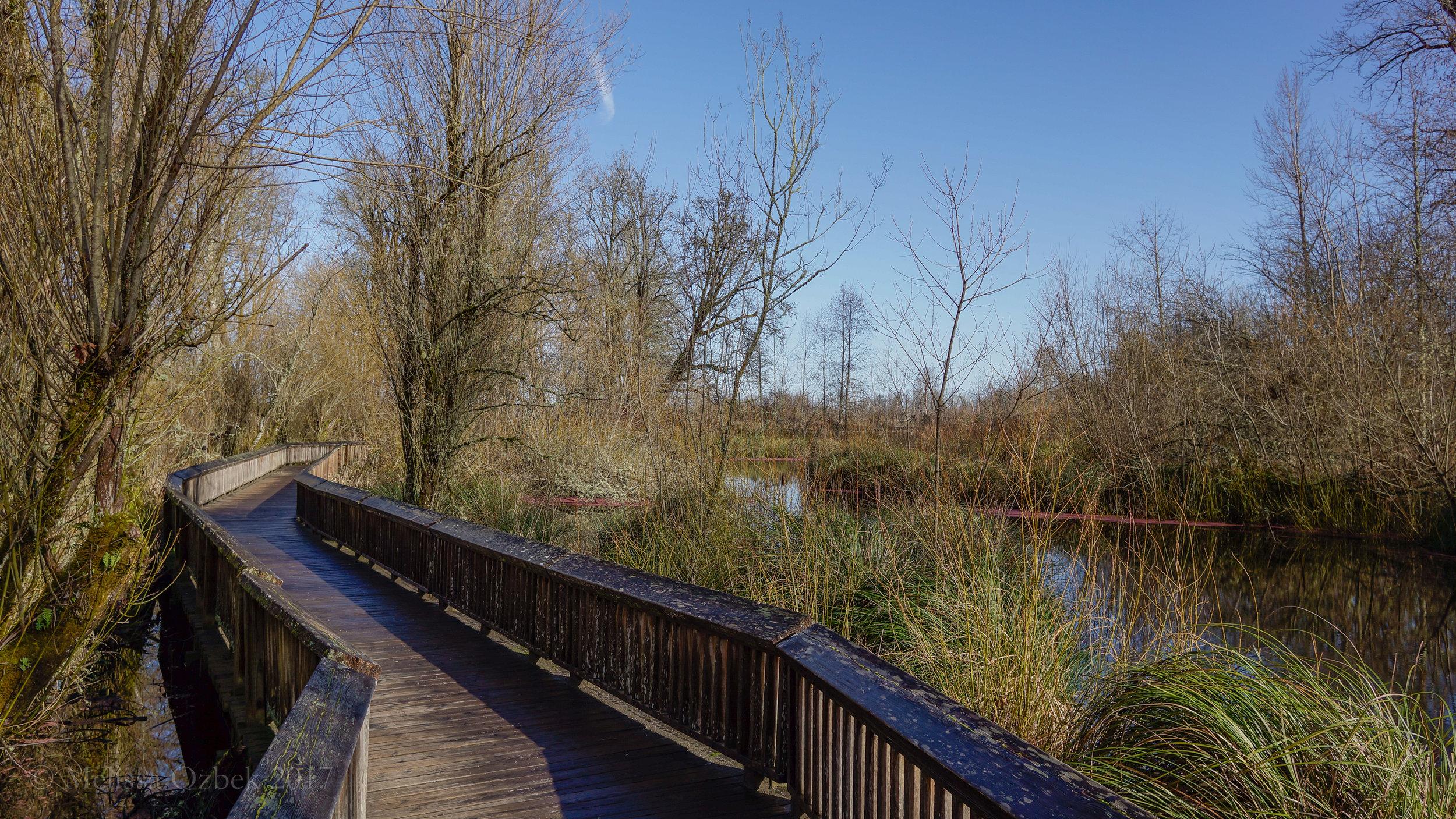 18. Nisqually Estuary Boardwalk Trail