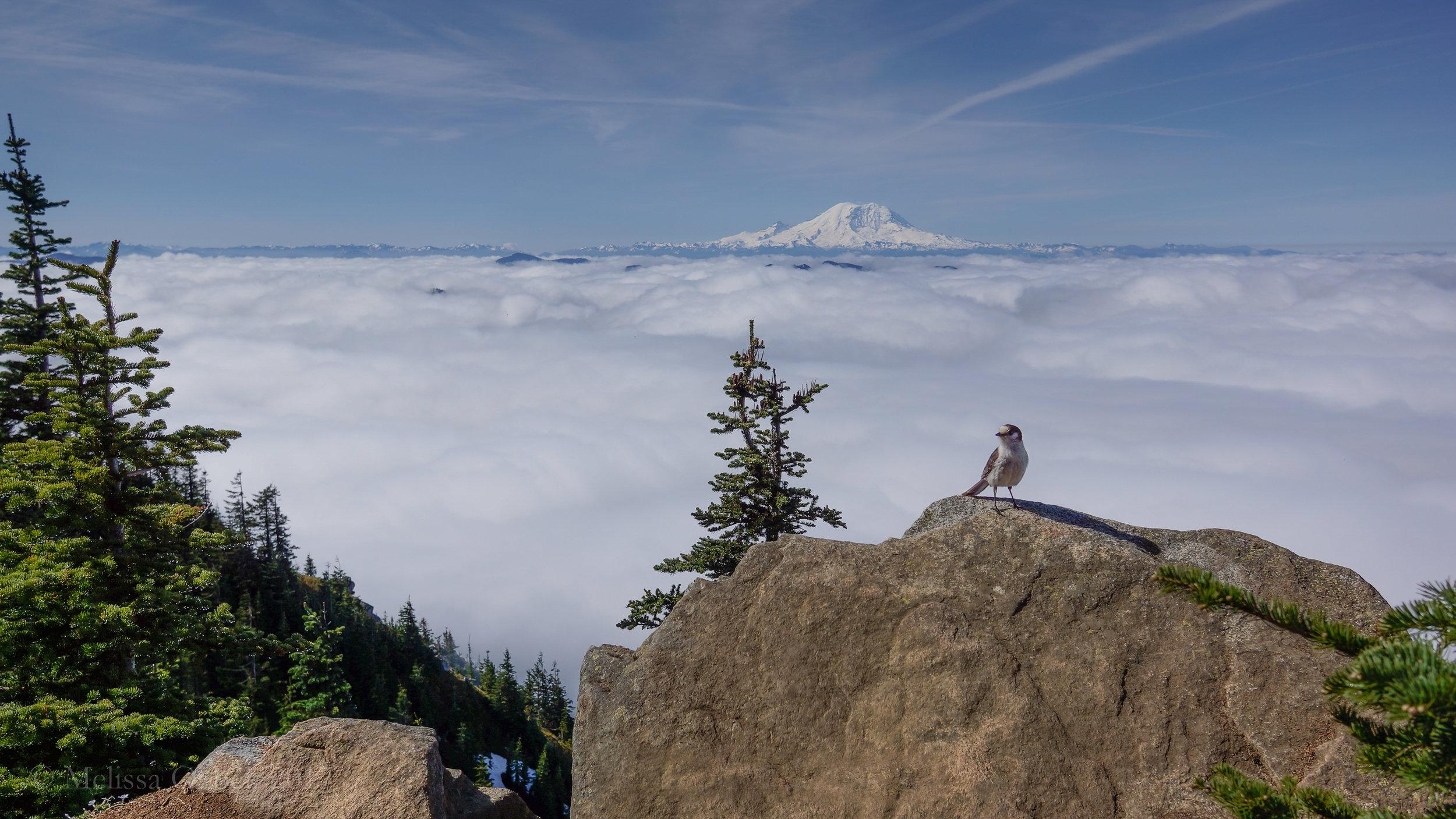 10. Bandera Mountain