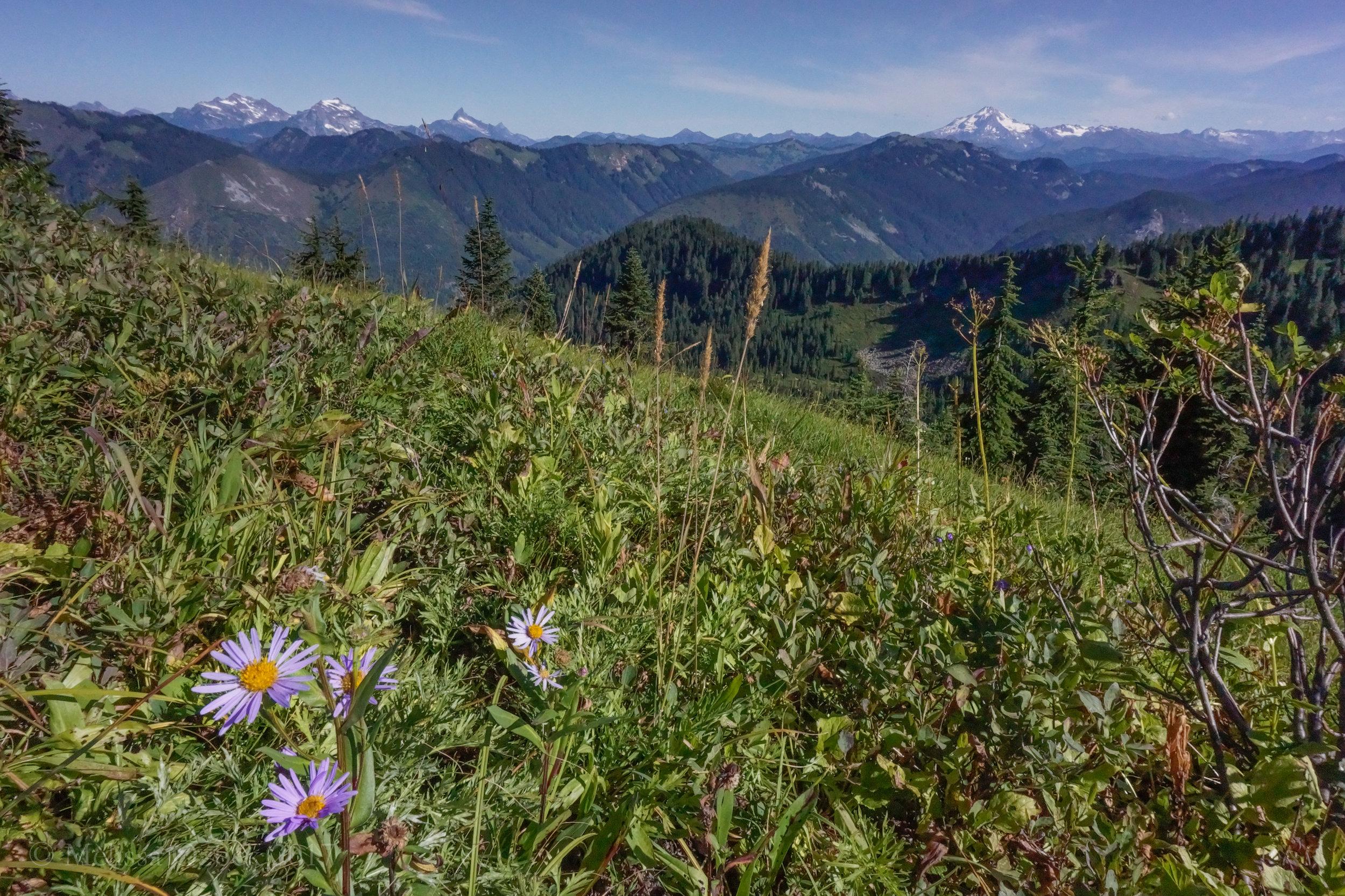 8. Johnson Ridge-Scorpion Mountain