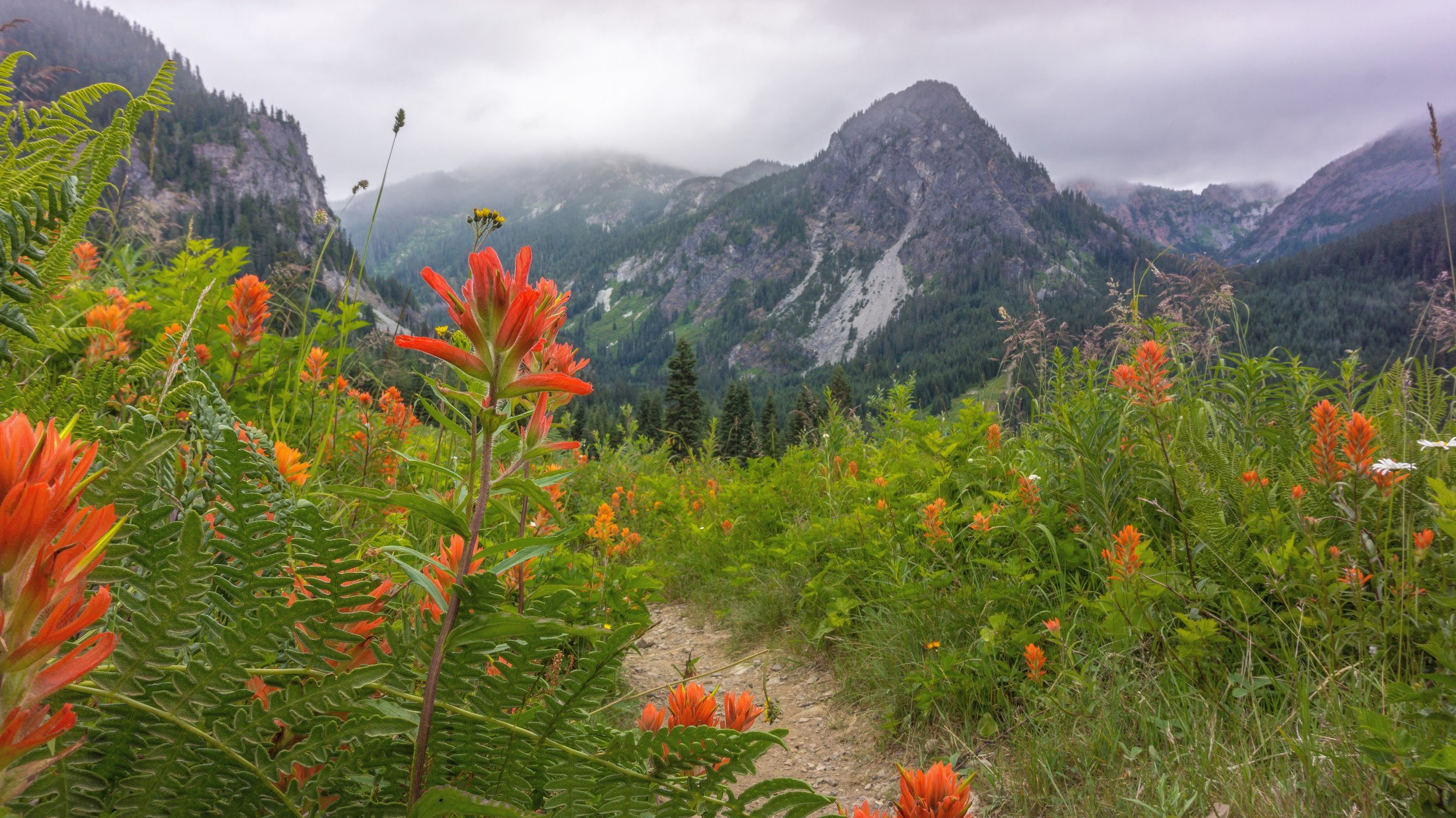 Smattering of red paintbrush with Guye Peak in the background.