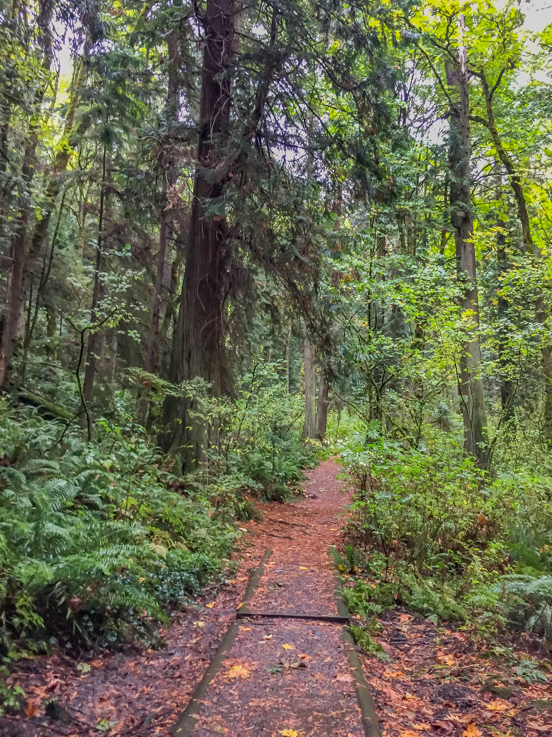 The start of the Lower Loop Trail
