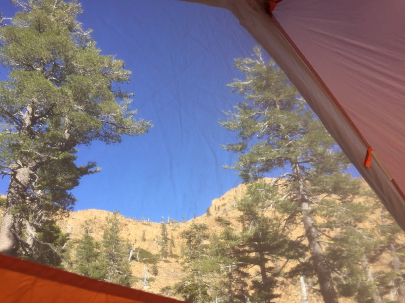 #tentview below the pine trees surrounding the lake.