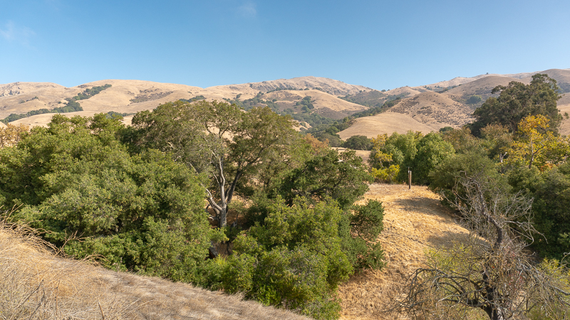 Oak trees and Mission Peak in the distance