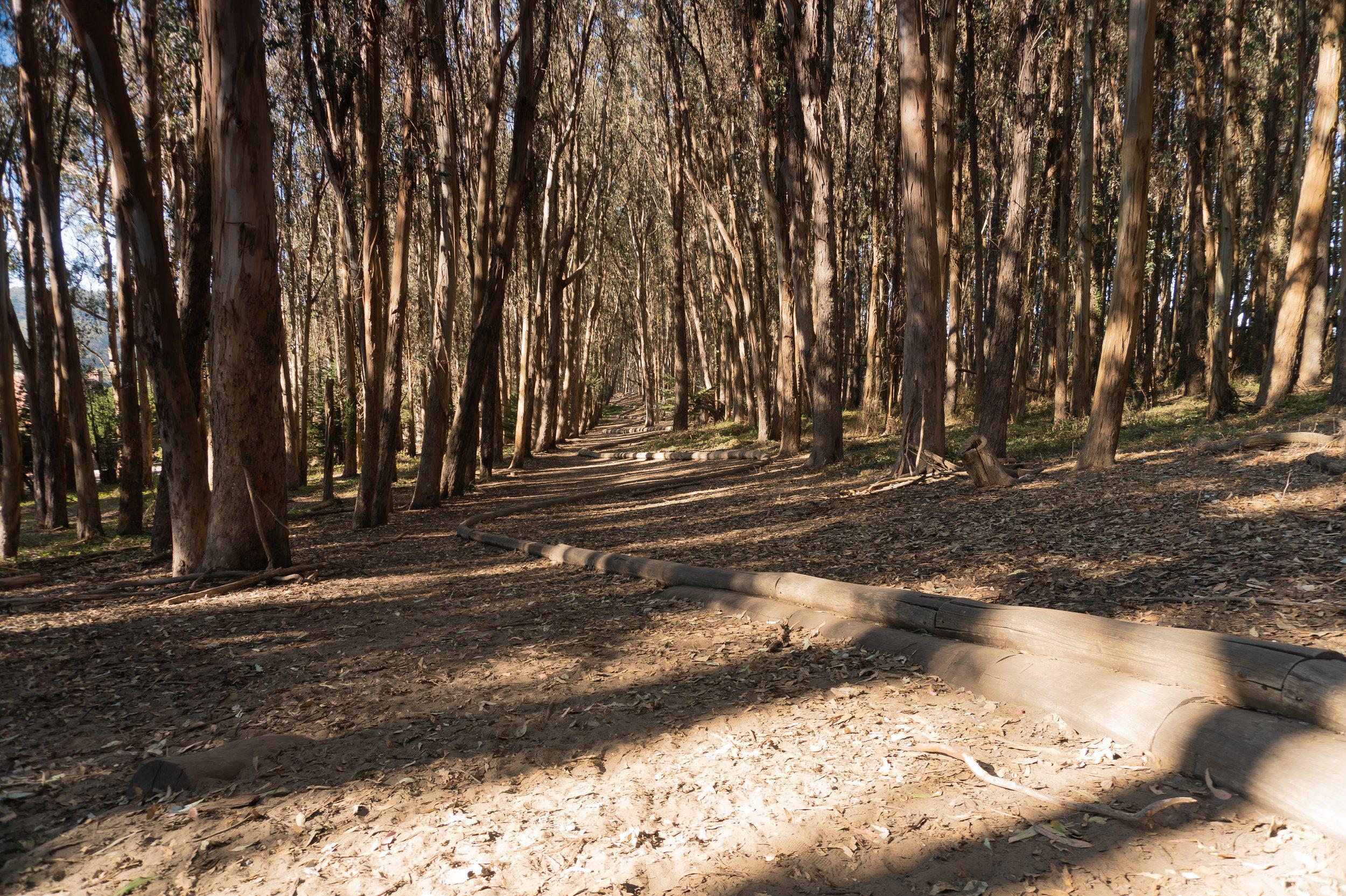 Wood Line, created 2010-2011
