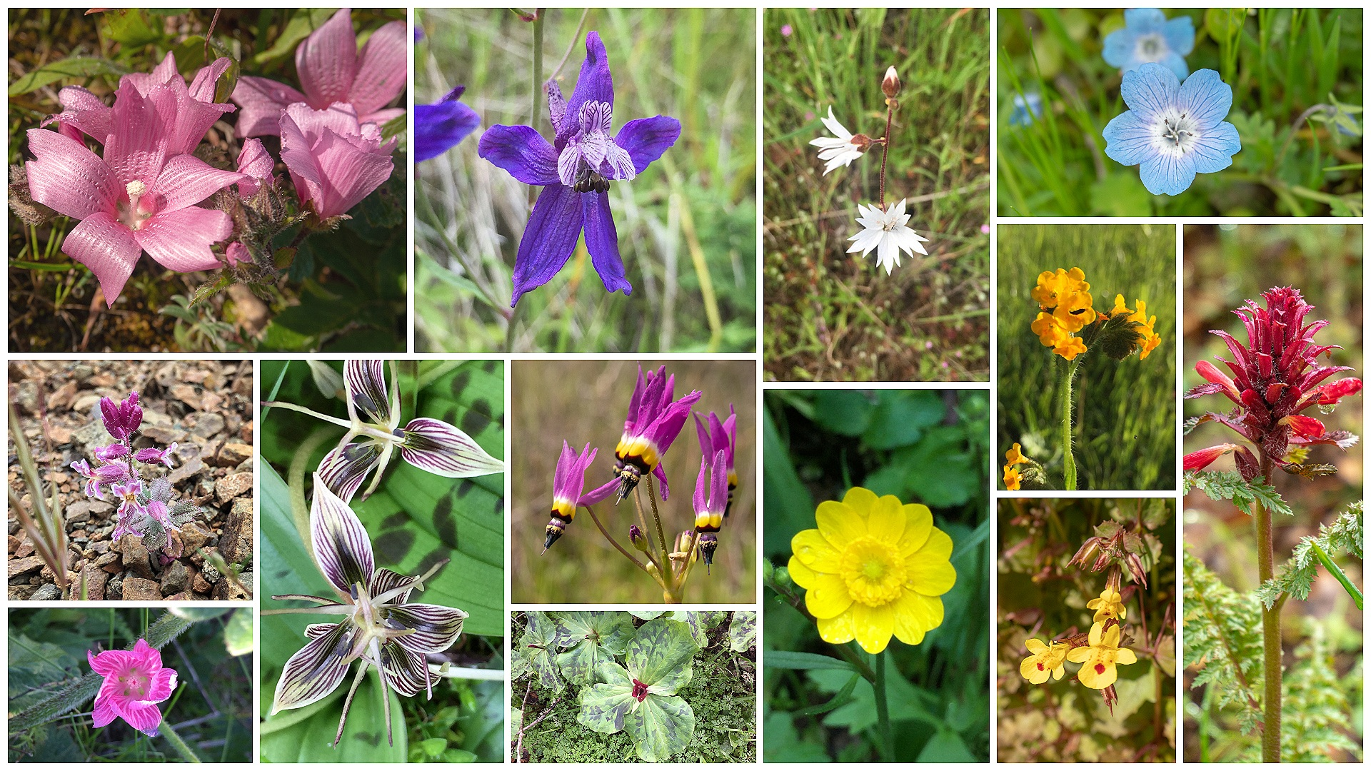 Find Great Wildflower Hikes in the Bay Area -