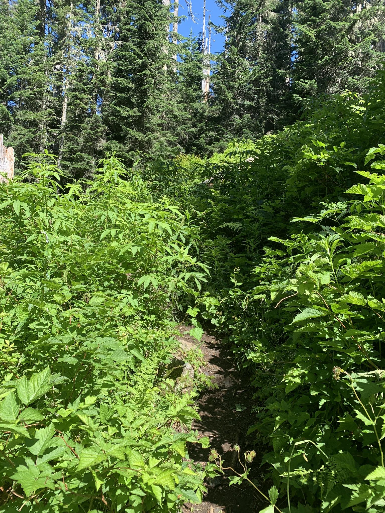 brushy trail