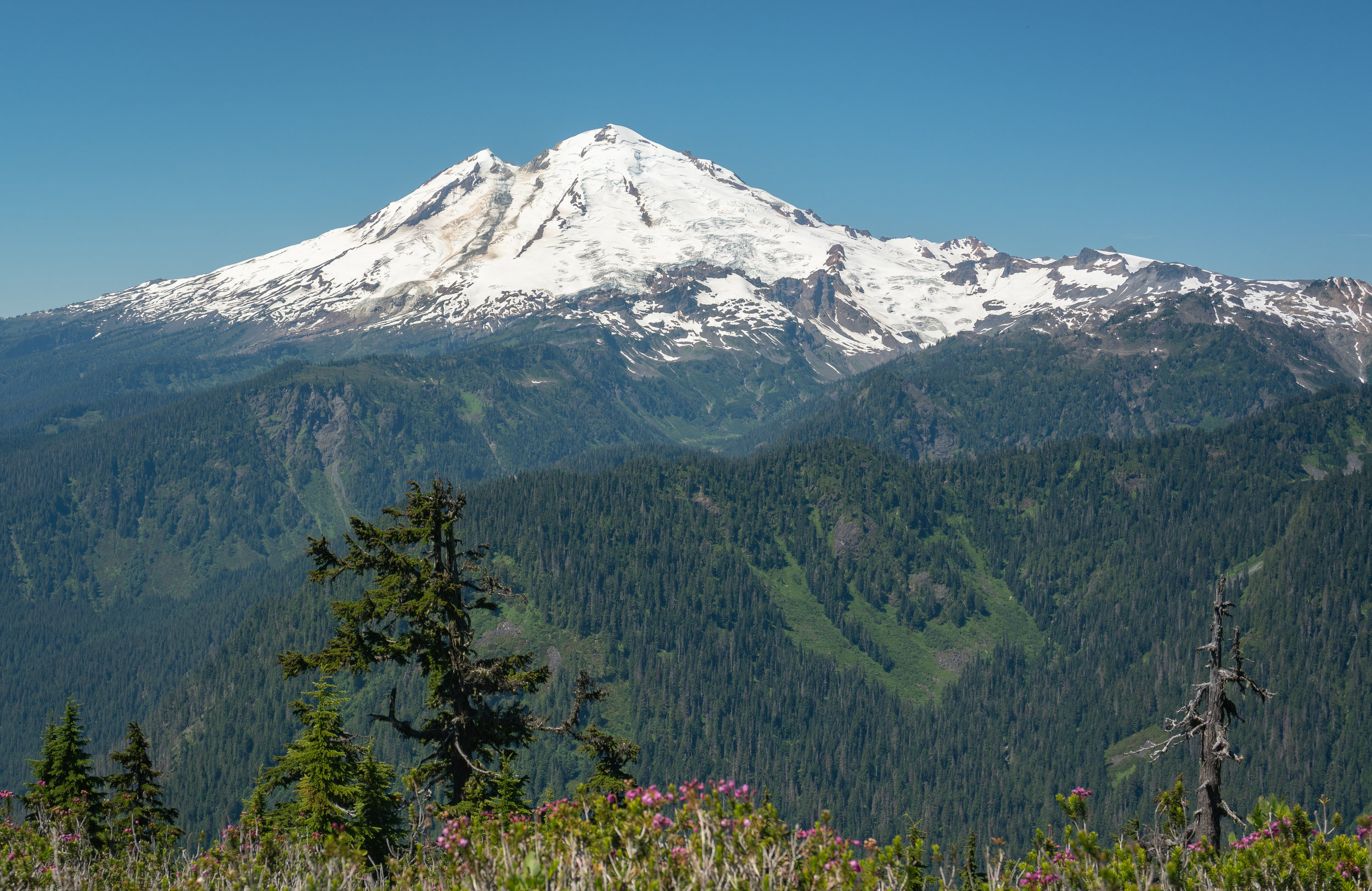 Looking west to Mount Baker, with mountain heather in the foreground