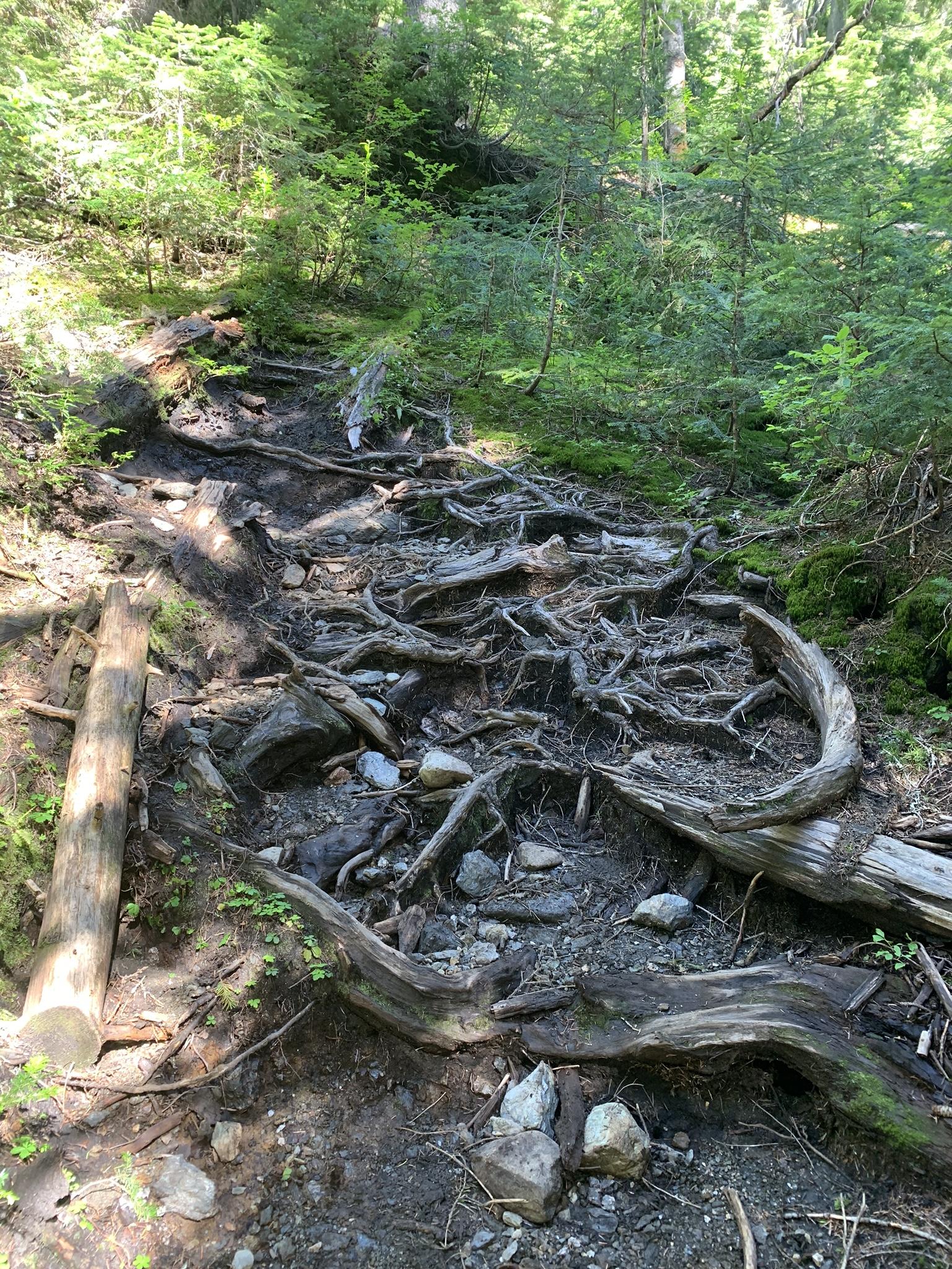 shannon ridge trail