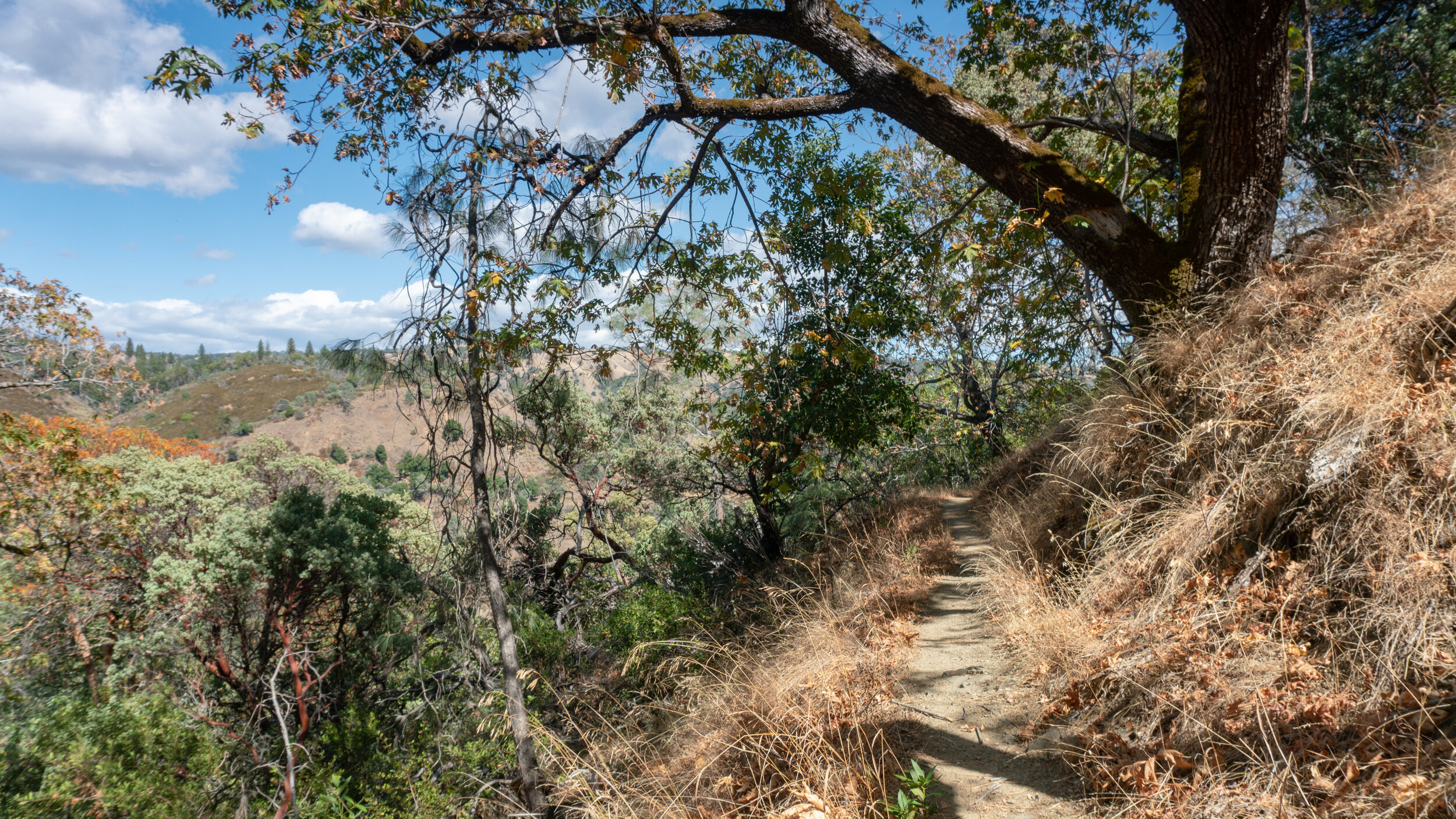 Views east to Middle Ridge and Blue Ridge on the Flat Frog Trail