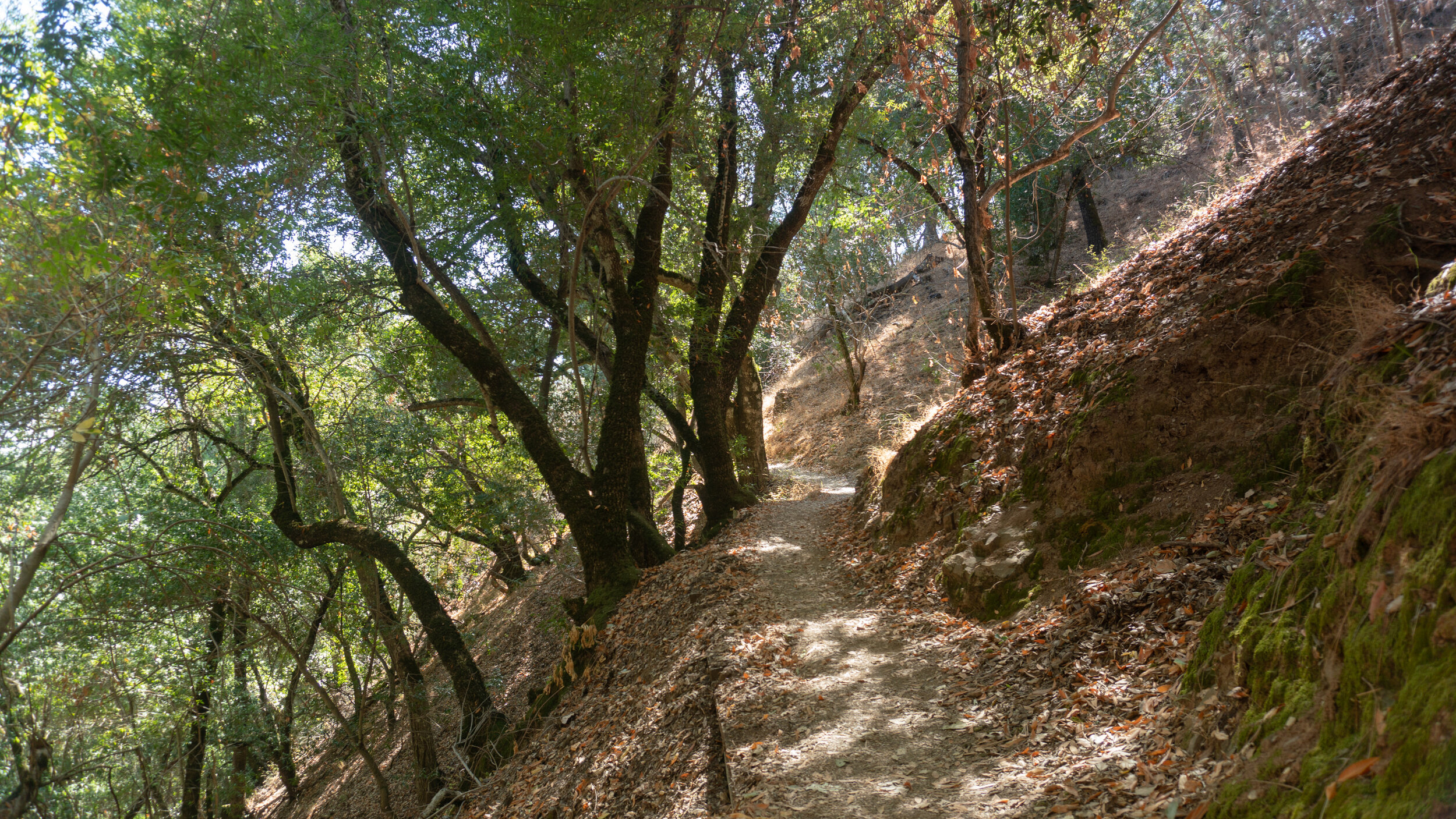 The Corral Trail