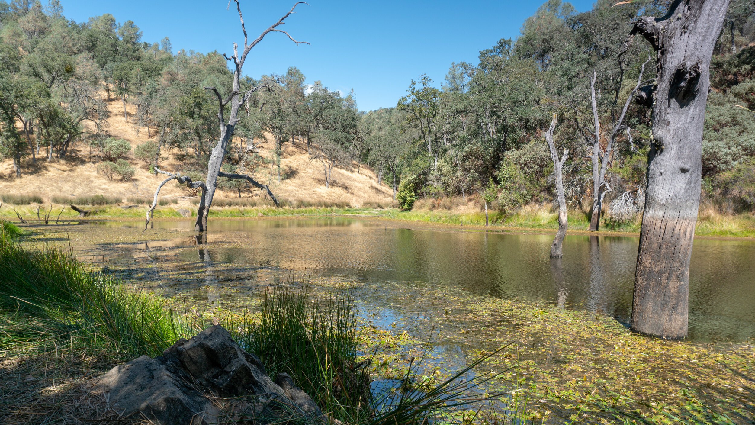 Frog Lake, Henry Coe State Park