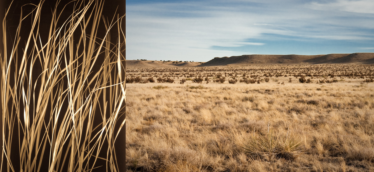 winter grass high plains-2.jpg