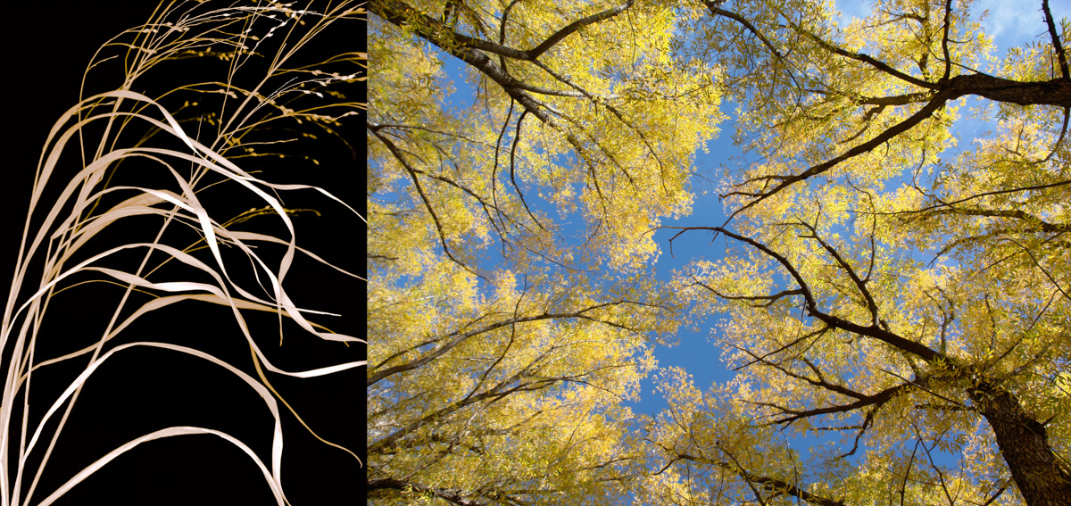 wild grass and cottonwoods fixed-2.jpg