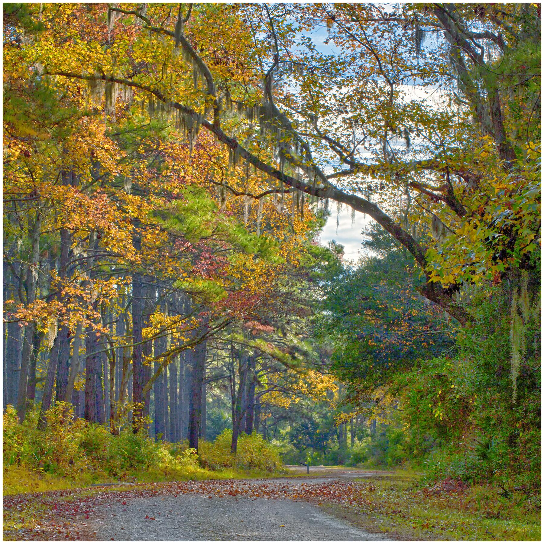 AlHeacox.Fall Color on Pickney Island.jpg