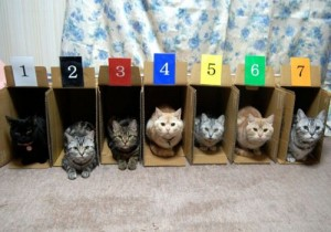 the-world_s-top-10-best-images-of-cats-in-boxes-7