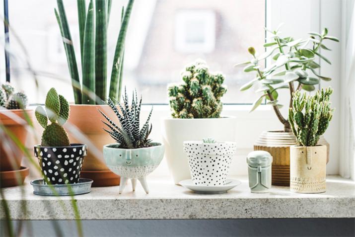 plants-home-decor-7.jpg