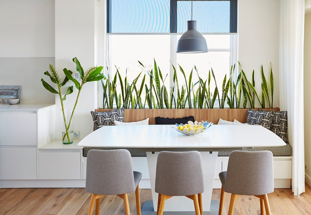 sydney-modern-indoor-plants-with-and-trees-dining-room-contemporary-nook-grey-pendant.jpg
