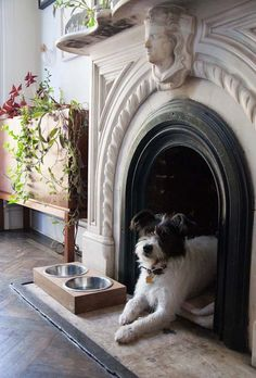 If your fireplace is closed up and not usable anymore, why not make it home for your pooch!