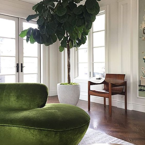 Curvy furniture, velvet furniture, and plants are all big hits.