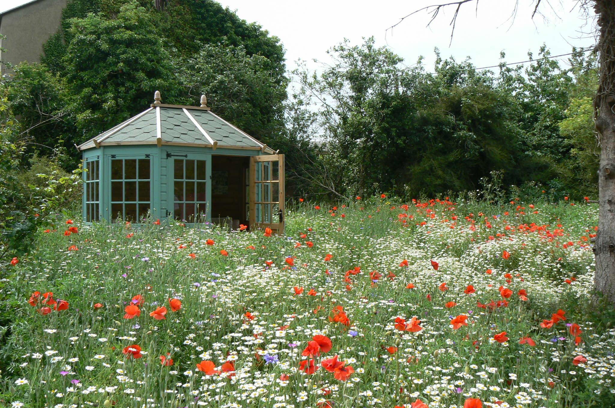 Wildflower meadow. Photo by Tim Evans