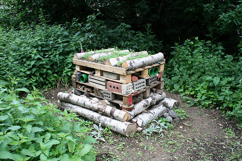 Bug hotel. Photo by ianvisits.co.uk